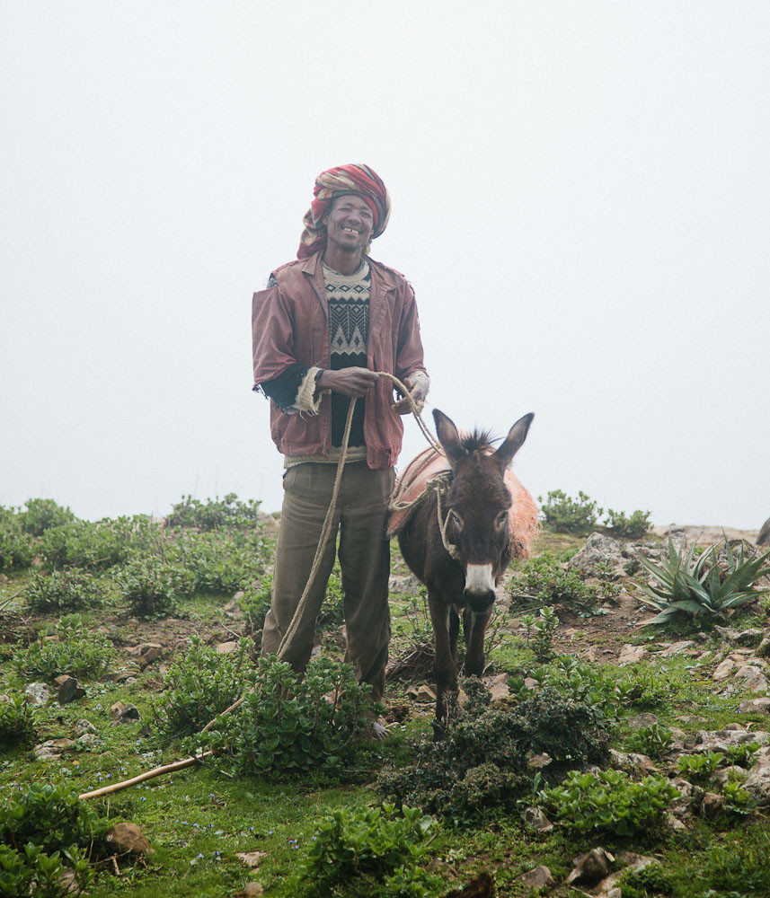 Local trekking guide and donkey in Wollo Highlands, Ethiopia